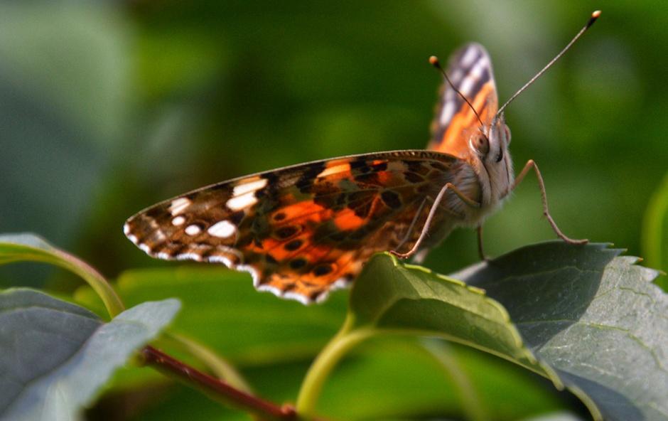Mooi al die vlinders in de tuin
