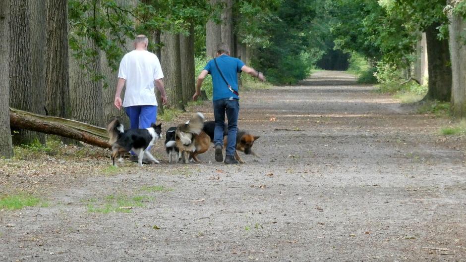 met de honden wandelen door de bossen