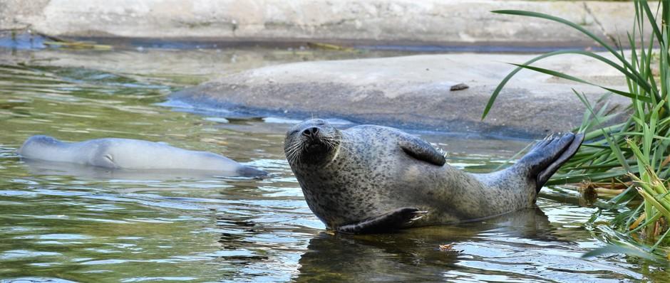 Het was een mooie dag voor een bezoekje aan Ouwehands dierenpark