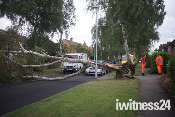 Tree fell over because of wind, Bowershott, Letchworth.