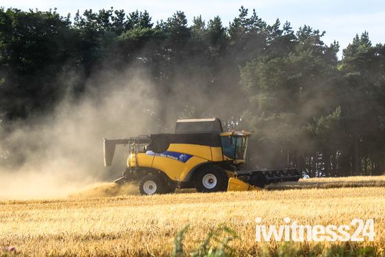 Gathering in the Grain