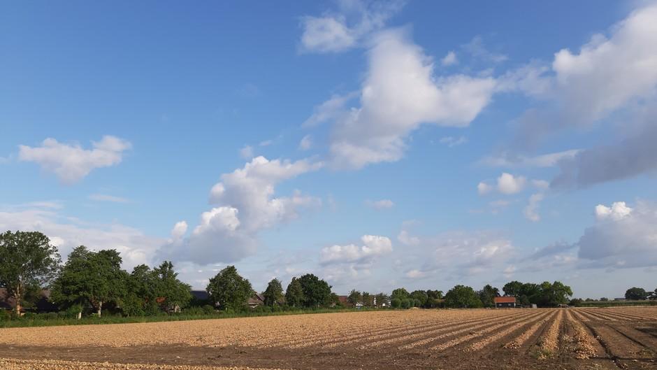 Uienveld