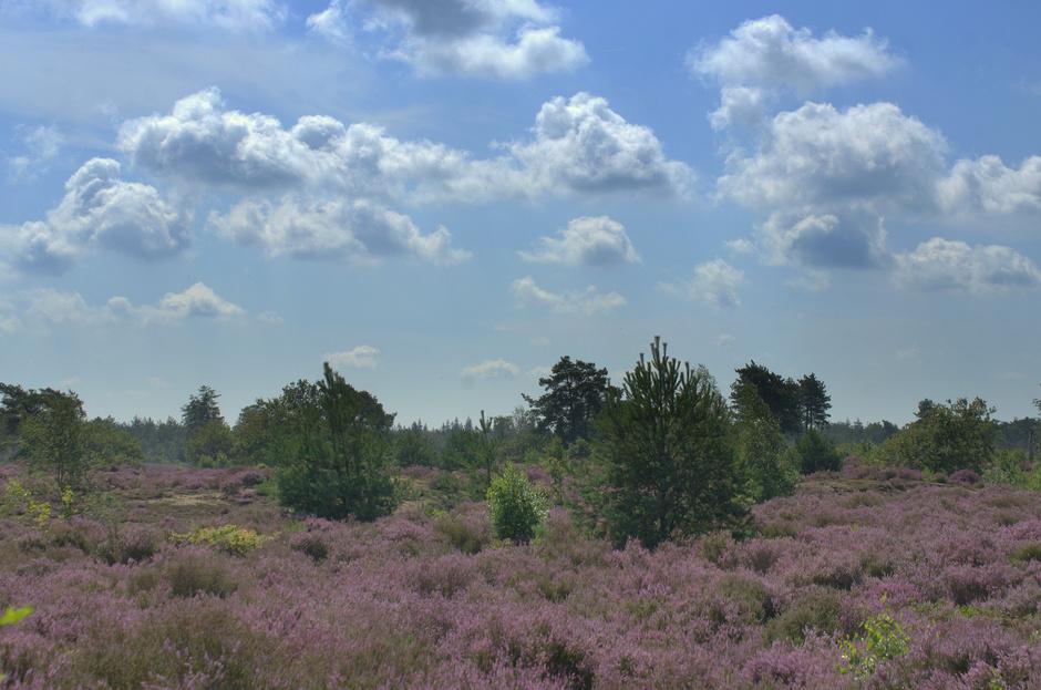 Een mooie wolkenlucht boven een paars Heideveld!