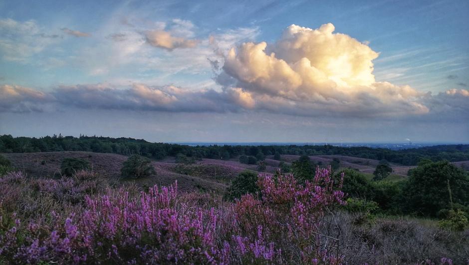 Kleurrijk bij zonsondergang op de Posbank