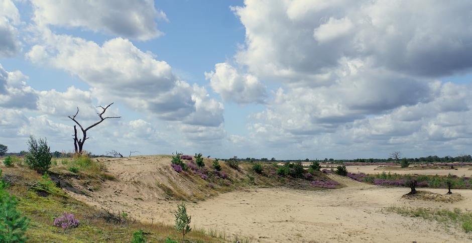 Wolken zon wat wind.Prima dag om te wandelen op de Heide.