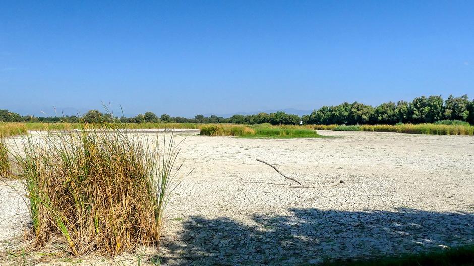 snikheet zonovergoten droog moerasgebebied