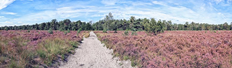 Panorama Rucphense Heide