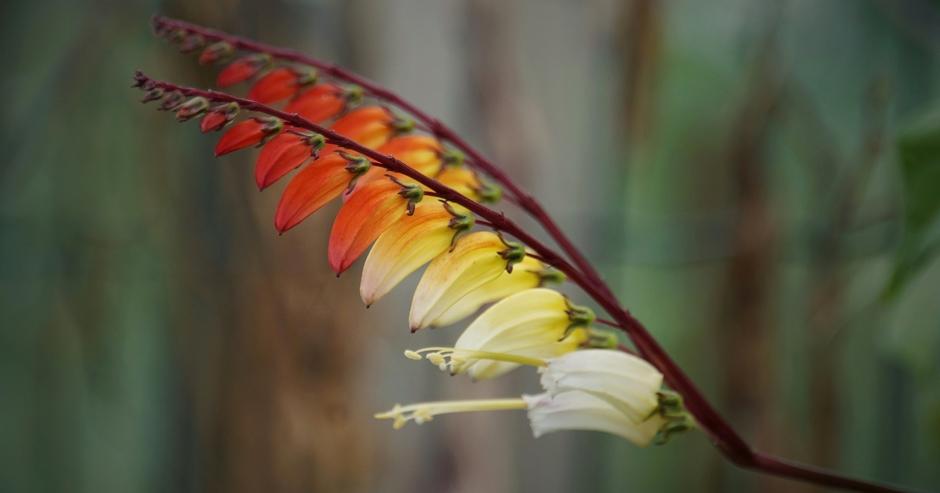 Herfstkleuren. Vanmorgen veel zon inmiddels  meer bewolkt in Brabant Zonnetje laat haar licht vallen op de Spaanse Vlag,een klimplant in bloei in September