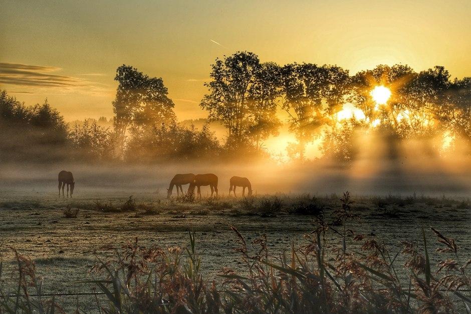paarden in de ochtend mist