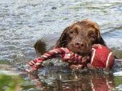 water baby pip (dog)