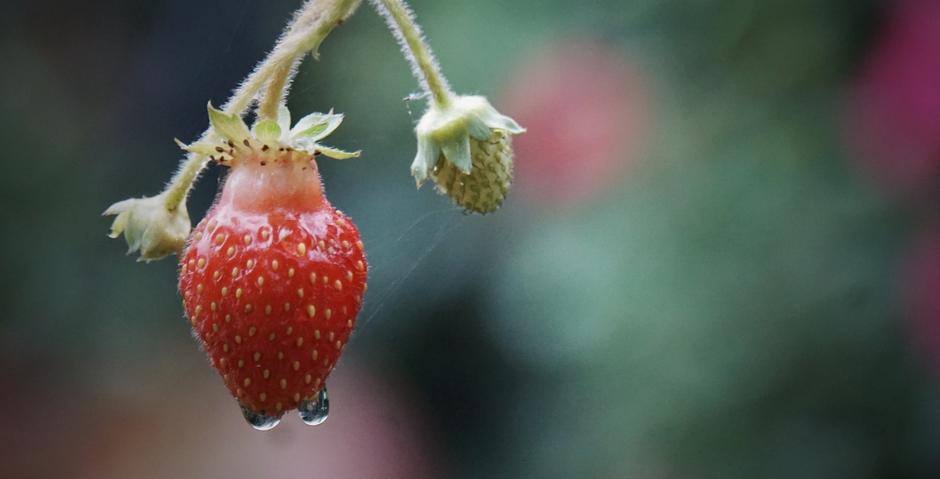 """Vanmorgen vroeg hing dit """"Zomerkoninkje"""" in de regen. Weekend Zomerweer...!"""