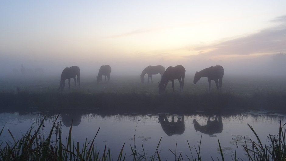 Een mooie rustige start van deze zaterdag met mist