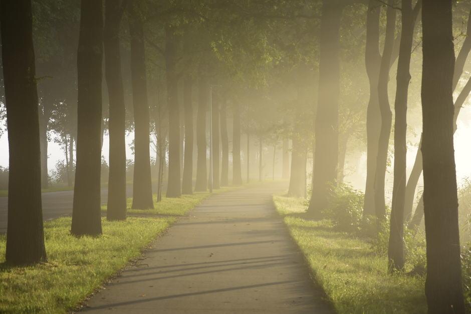 Mist bij zonsopkomst in Oudega(sm)