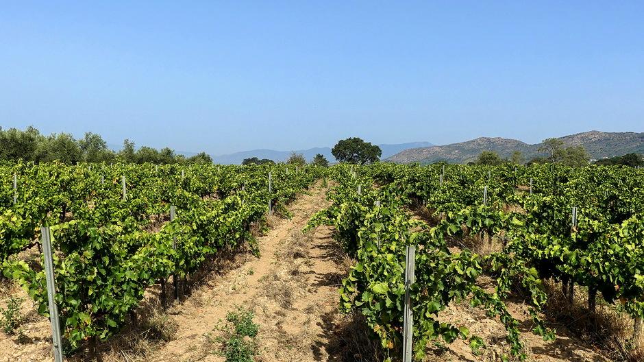 blauw zon en wijngaard