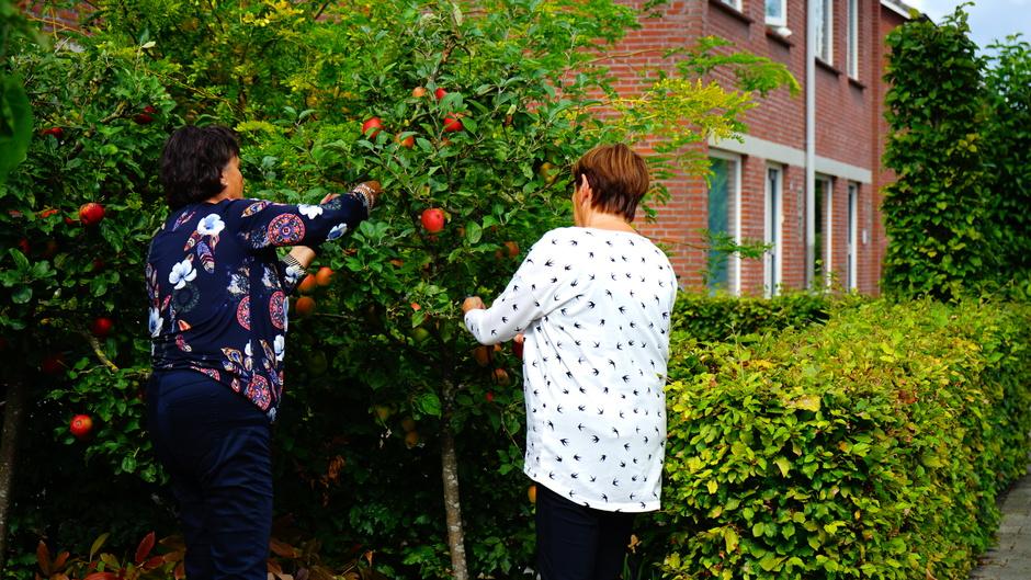 Appel worden geoogst