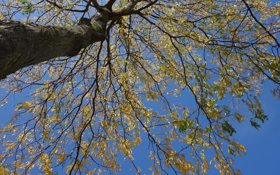Herfstkleuren en zon