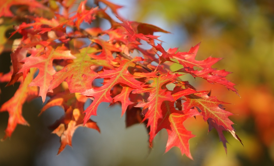 Einde van de zomer en begin van de herfst