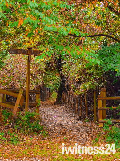 As we go into autumn