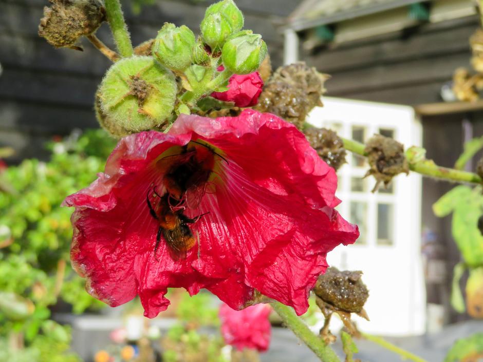 vechten om de nectar