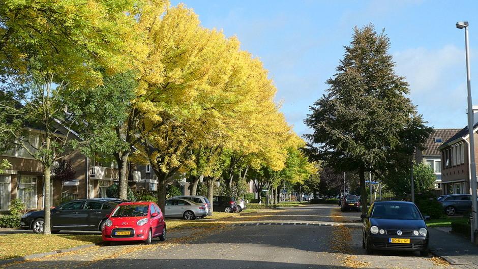 mooi beginnen de herfstkleuren te komen