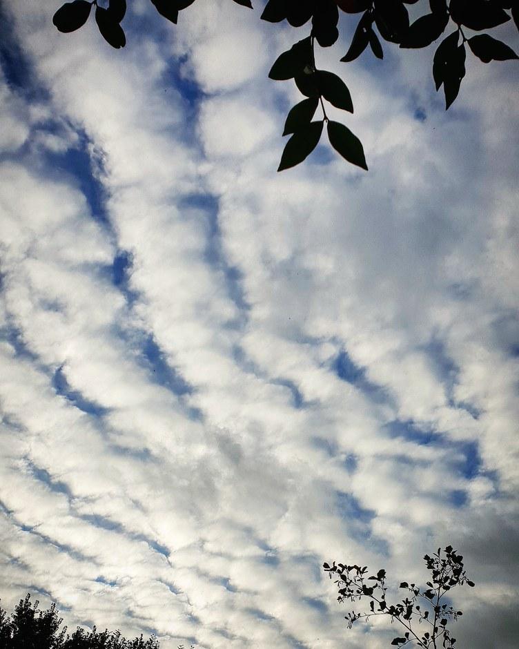 Streperige wolkendek