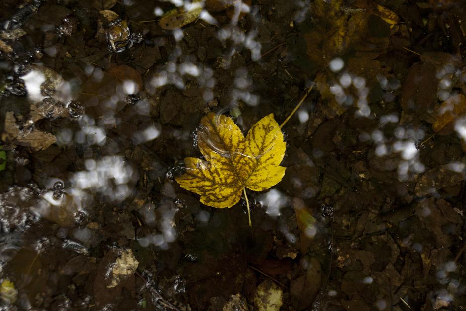 Herfst en regen