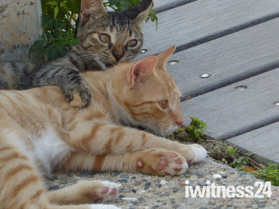 Cats relaxing in the shade on a hot day