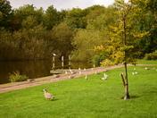 Wensum Park