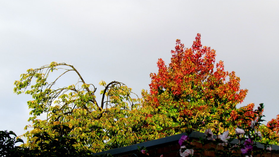 Kleurende bladeren