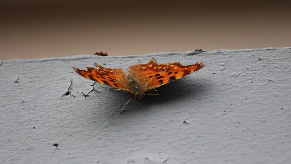 Mooi weer, veel vlinders en vooral veel lieveheersbeestjes....