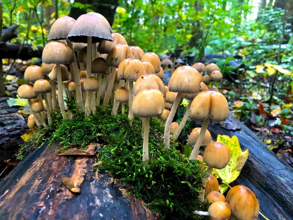 Amsterdamse Bos 'bloeit'