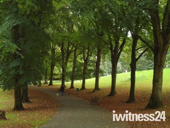 Ashcombe's Autumn