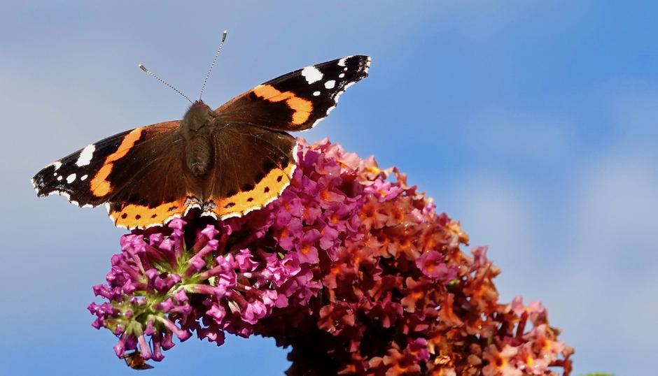 Nog steeds vlinders te zien.