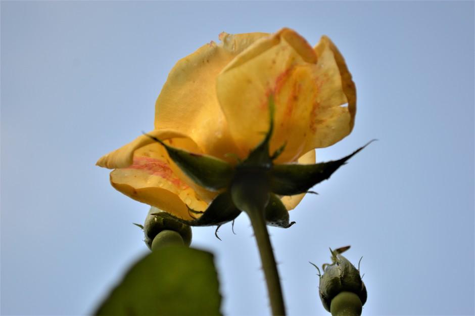 Late bloei.