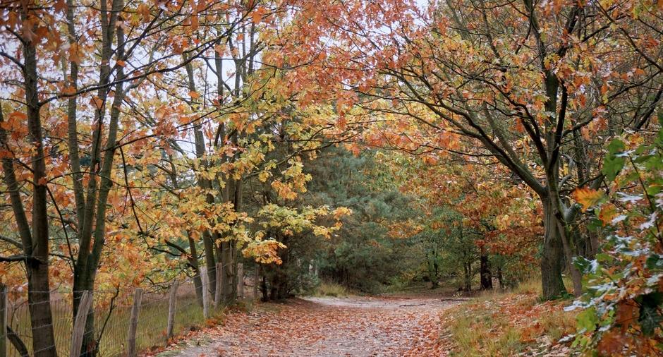Grijze dag en motregen.Herfstkleur maakt veel goed.
