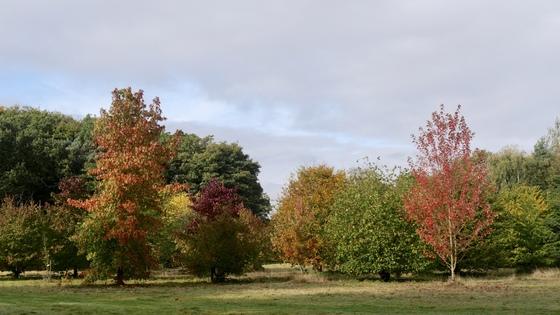 The Barn Arboretum