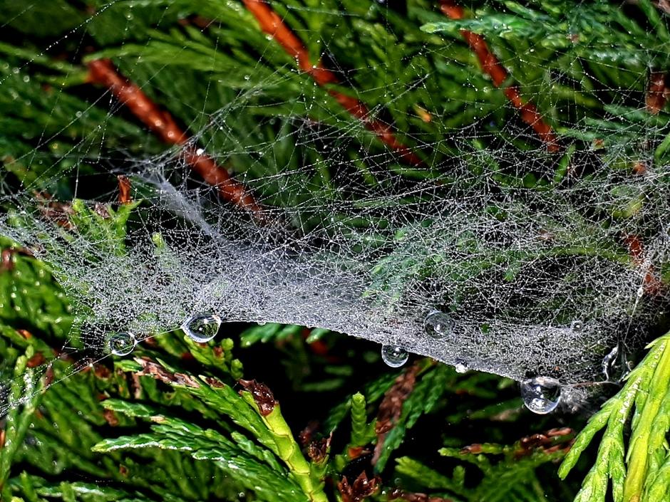Dicht spinnenweb met ochtenddauwdruppels.