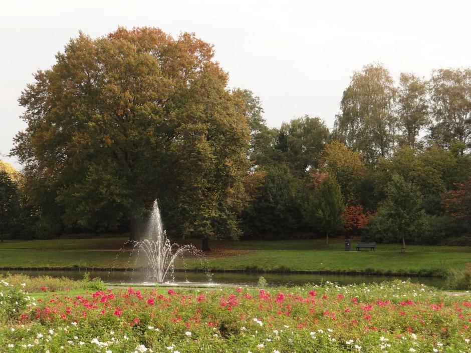 Rozen in Roosendaal