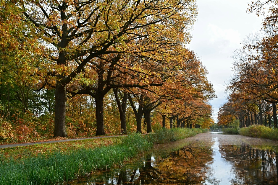 Herfstkleuren langs het Apeldoorns kanaal.