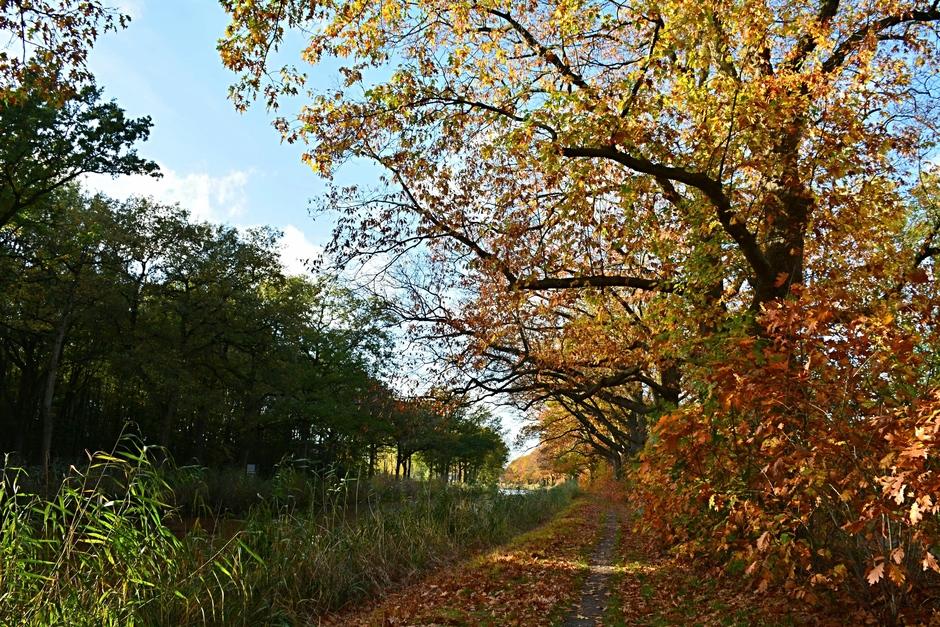 Herfst langs het Apeldoorns kanaal.