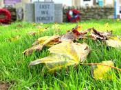 Fallen leaves at Seaton War Memorial