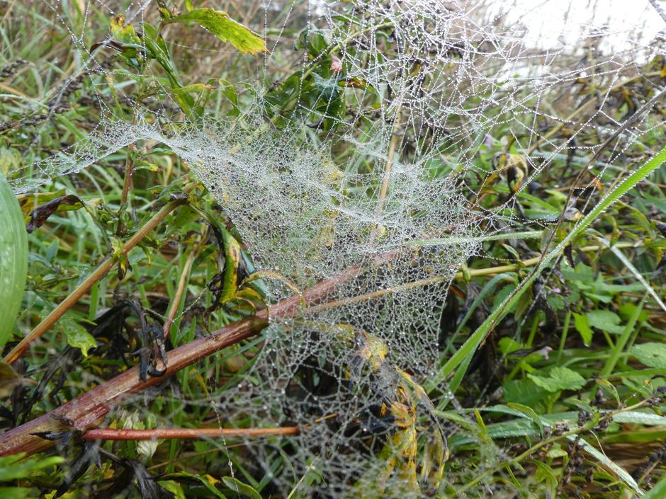 Tapijt van spinnenweb.