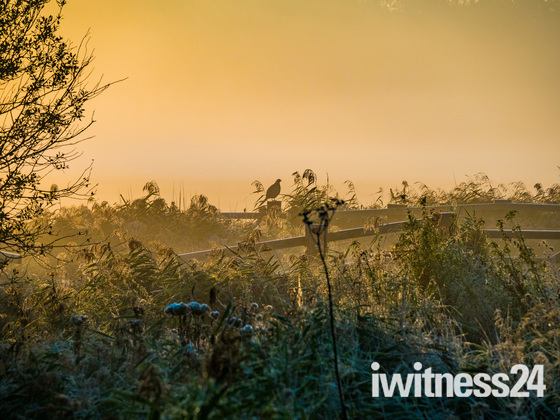 Misty Strumpshaw Sunrise