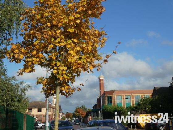 Autumn scene in Albert Road