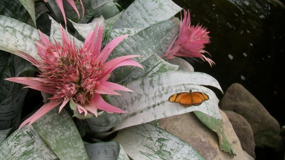 Mooie tropische bloemen met oranje vlinder erop