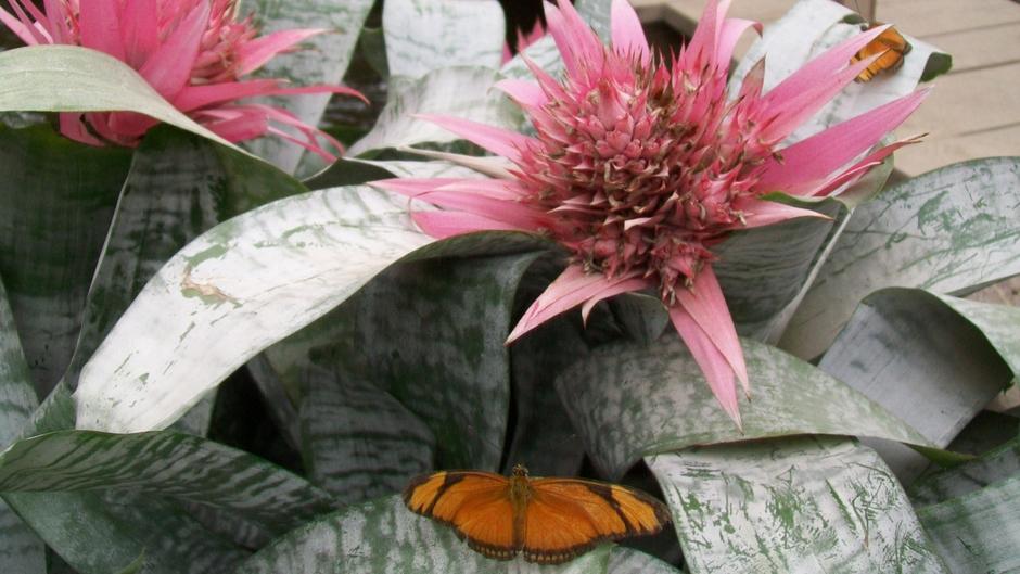 Roze bloemen met oranje vlinder erop
