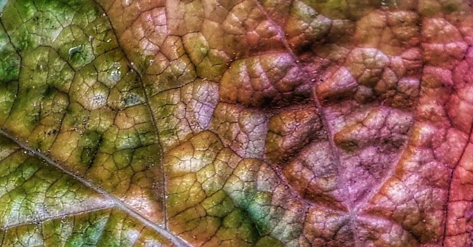 Herfstblad in detail. Echt kunstwerk