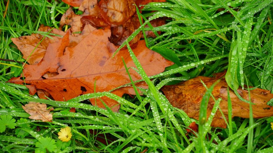 Nat gras en bladeren