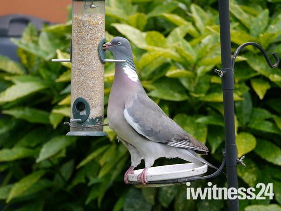 Cheeky feeder.