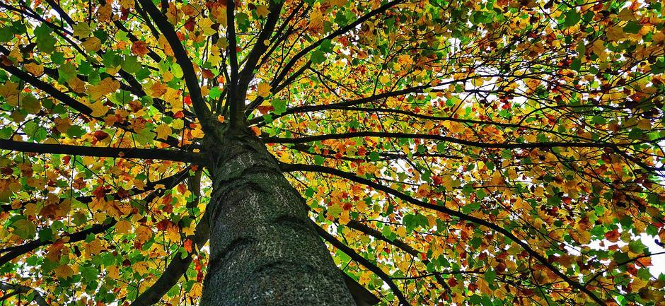 Kleur in de natuur opzoeken op deze grijze dag